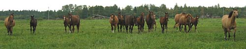The Cypress mares in Canada
